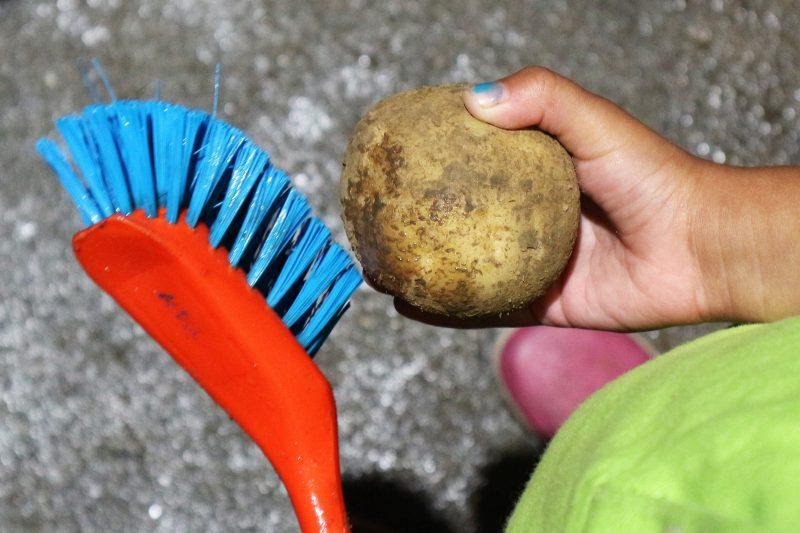 aardappel schoonmaken bij hoeksche chips