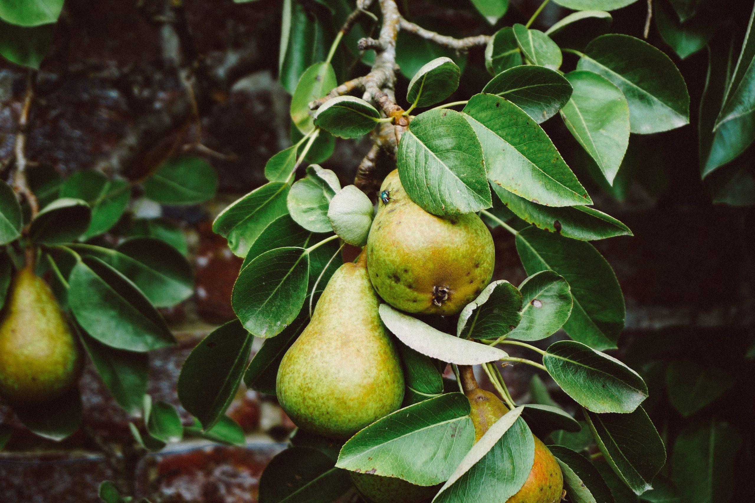 fruitvliegjes voorkomen bestrijden diervriendelijke tips