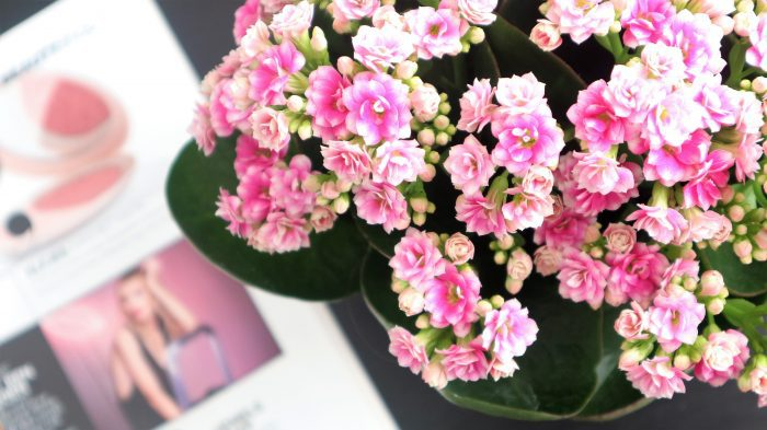kamerplanten weinig onderhoud kalanchoe