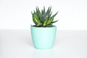 kamerplanten weinig onderhoud lijst tips