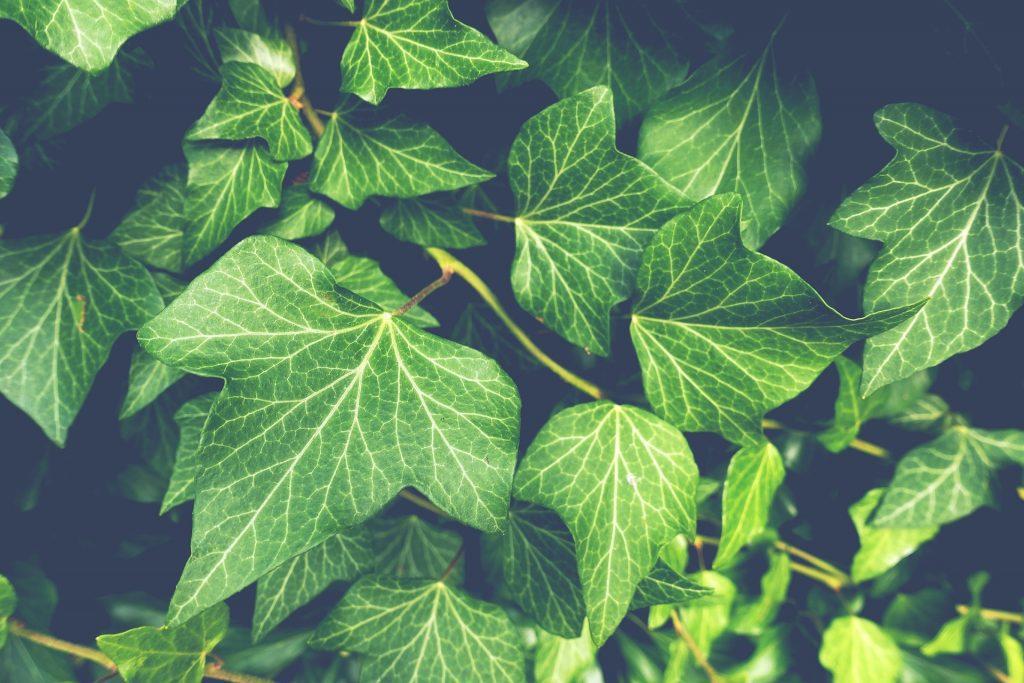onderhoudsvriendelijke tuin tips
