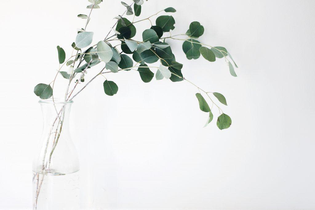 groene oplossingen schoonmaken beter voor milieu schoonmaakmiddelen review