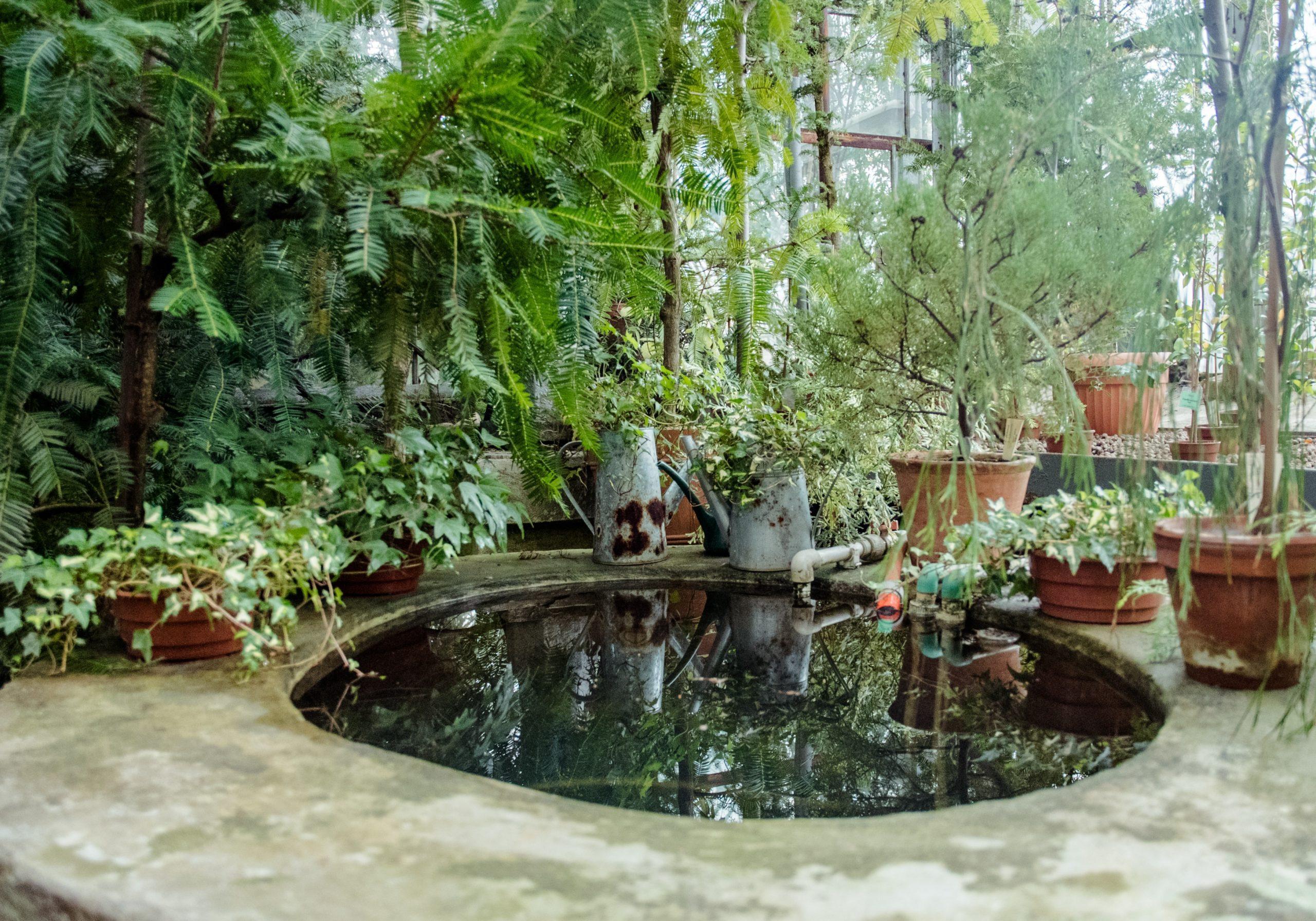 vijver in de tuin aanleggen tips